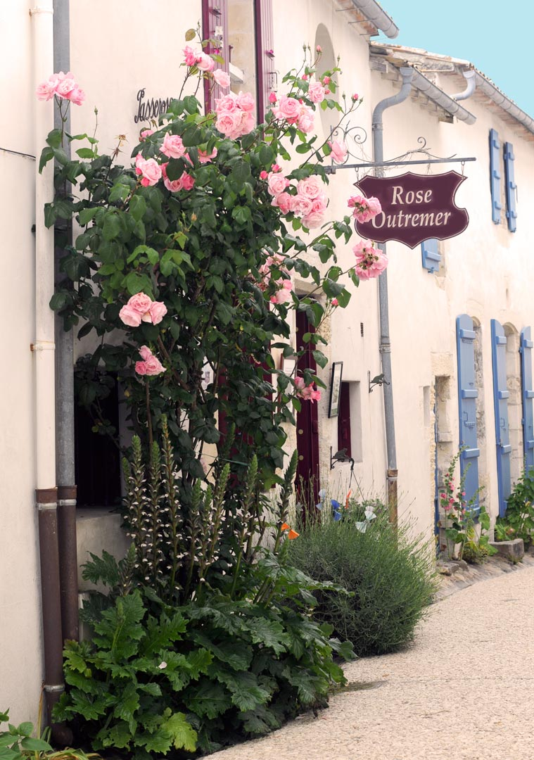 Boutique Rose Outremer