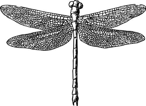 Gravure libellule